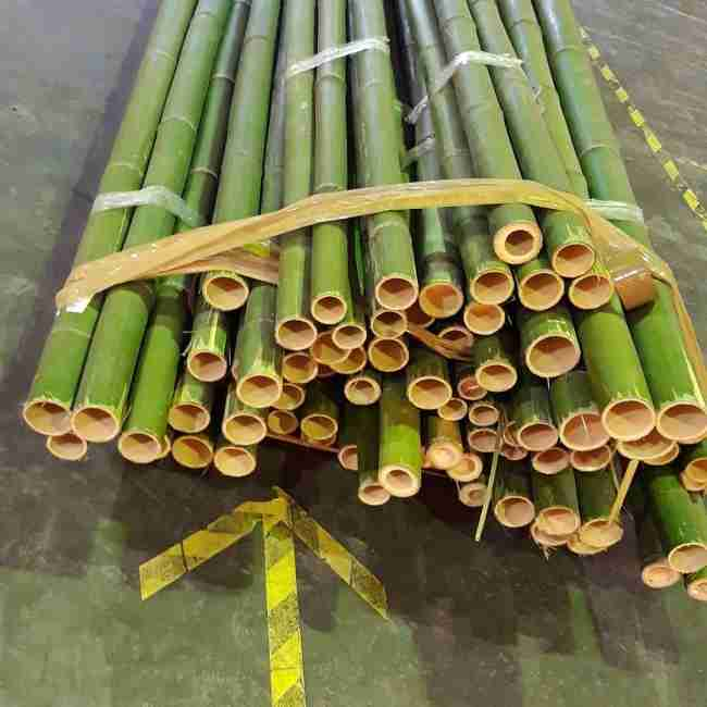 Бамбук натуральный зеленый d 20-30мм L=3м